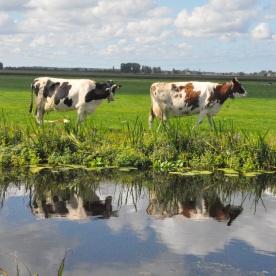 (polder, Netherlands)