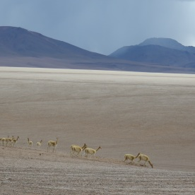 (Atacama desert, Chile)