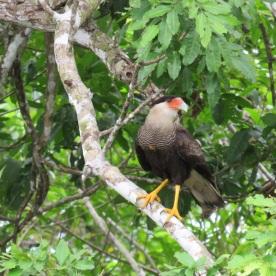 (Ibare river, the Amazon, Bolivia)