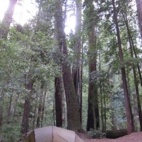 (Big Basin Redwood State Park, USA)