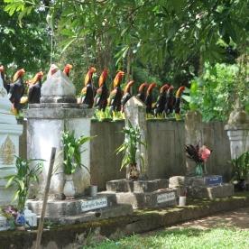 (Pai, Thailand)