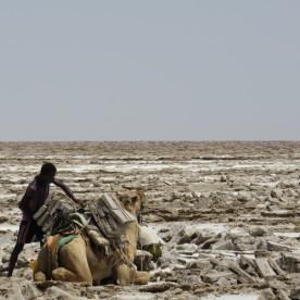 transporting salt on camels (Afar, Ethiopia)