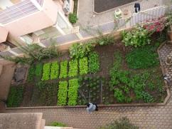 our veggie garden (Bamako, Mali)