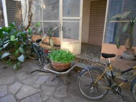 coriander home delivery (Bamako, Mali)
